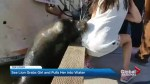 Sea lion snatches small girl off harbour dock in Richmond, BC